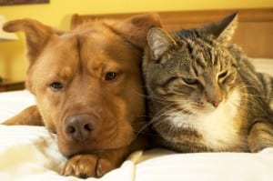 Cat And Dog Bordetalla Vaccinations 300×199