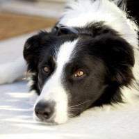 The Scottsdale Pet Hotel Difference