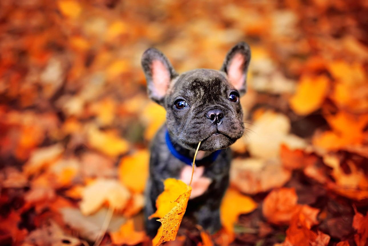 Fall dog grooming: Information on dog coats