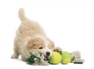 Benefits Of Dog Daycare For Owners