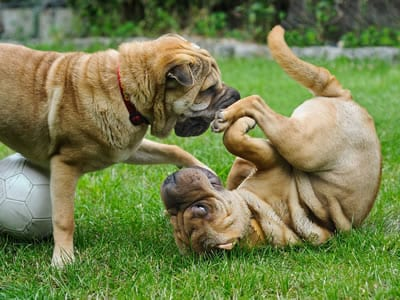 Dog Daycare Tempe, AZ - Dogs Require Daily Exercise