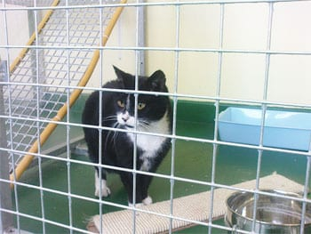 Cat In Animal Shelter Kennel