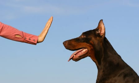 Tips For Training Your Dog