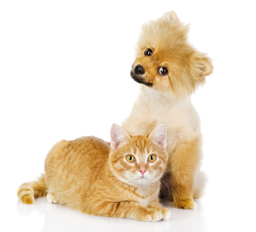 cute dog and cats make great family pets