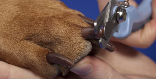 How To Clip Dog Nails Video