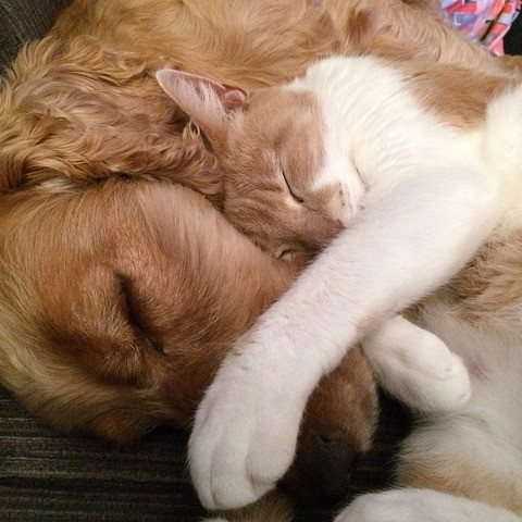 Dogs and Cats Pet Grooming