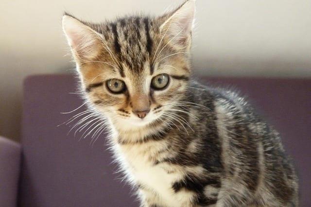 Cat Boarding - Cat Pet Sitting - Scottsdale Arizona