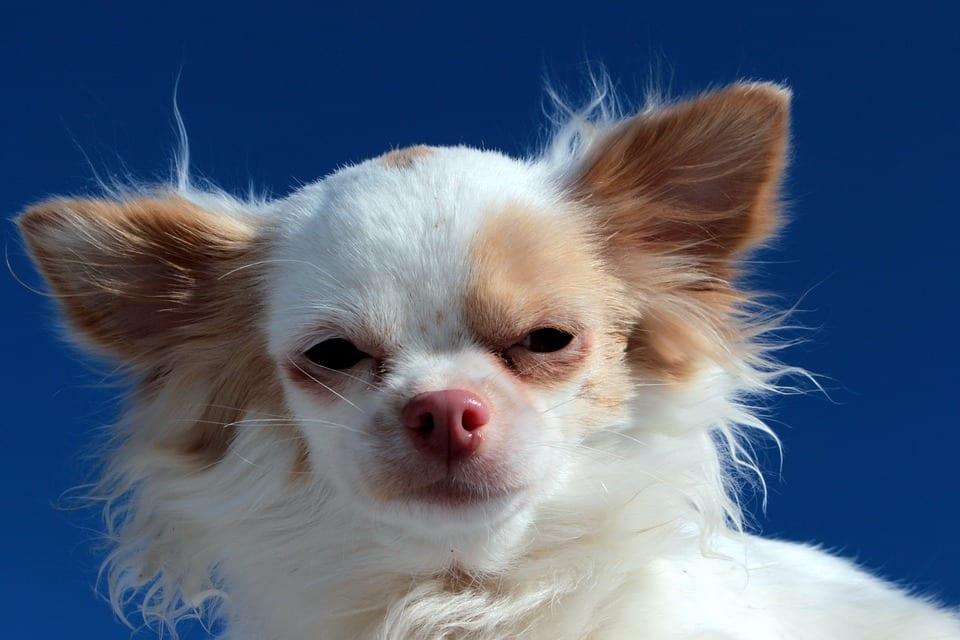 Scottsdale Pet Boarding