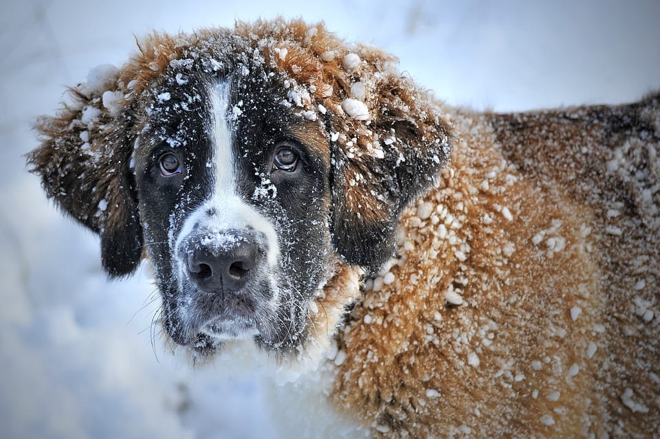 Dog Grooming In The Winter