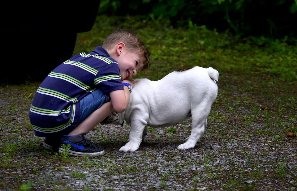 Is Your Child Ready for a A Pet