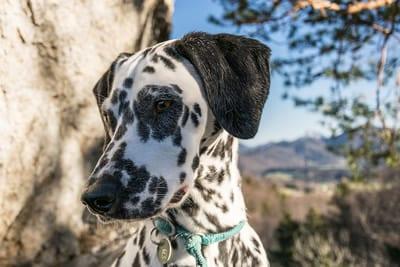 Dog Grooming - Tempe Scottsdale Pet Hotel