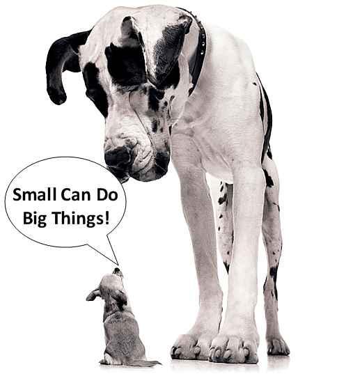 Big dog fucks little dog